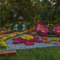 Картинки из хризантем :: Андрей Нибылица