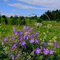 Полевые цветы. :: Олег Дейнега
