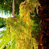 семена пальмы :: Александр Деревяшкин
