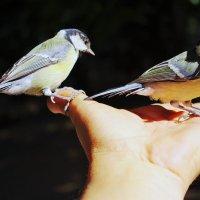 птицы :: Сергей