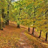 Тропинка в Золотую осень... :: Sergey Gordoff