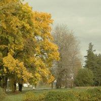 осень в городе :: Михаил Жуковский