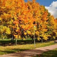 Клены выкрасили город колдовским каким-то цветом... :: Анатолий Колосов