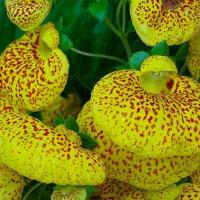 Эти удивительные цветы :: Милешкин Владимир Алексеевич