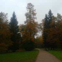 Осенний дождь :: Сапсан