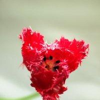 Аленький цветочек* :: Наталья *