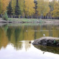 У озера :: раиса Орловская
