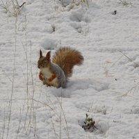 Ура!! Снег..снег..:)) :: Леонид Балатский