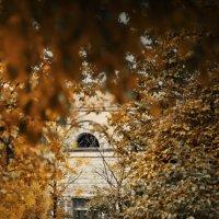 В Таврическом саду. :: Ирэна Мазакина