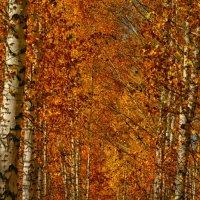Октябрь в разгаре :: Любовь Потравных
