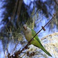 Птах :: Fiodor