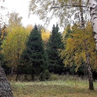 На  опушке леса. :: Виталий Селиванов