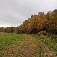 Приехал! Теперь  в  лес. :: Виталий Селиванов