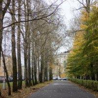 Осень :: Светлана Ку
