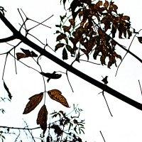 Осенняя графика :: Marina Bernackaya Бернацкая
