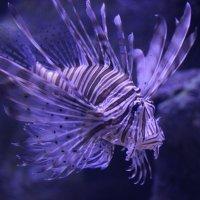 океанариум :: андрей шилов