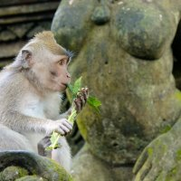 Monkey Forest. Bali :: Sanjar Agzamov