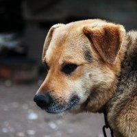 Человек собаке друг! :: Натали Пам