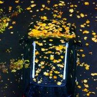 Осенняя  метель :: олег свирский