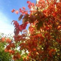 Яркие краски осени :: Елена Семигина