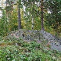 В лесу :: Ольга Васильева