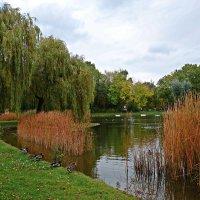 Нежная осень ходила по скверам и паркам…... :: Galina Dzubina