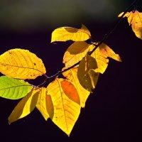 Это осень! :: Николай Николенко
