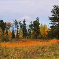 Осенние краски :: Павлова Татьяна Павлова