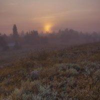 Сквозь туман :: Алина Шостик