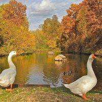 два гуся и осень :: НАТАЛЬЯ