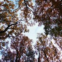 Деревья в небе :: spm62 Baiakhcheva Svetlana