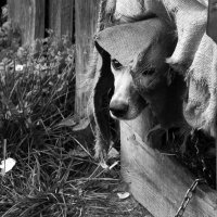 Охраняя своих щенят :: Татьяна Копосова
