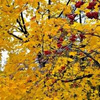 Осень в нашей жизни. :: Михаил Столяров