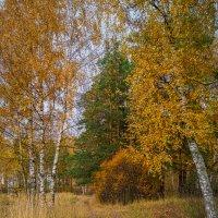Середина октября в Подмосковье :: Андрей Дворников