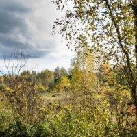 Вид на осень :: Владимир Буравкин