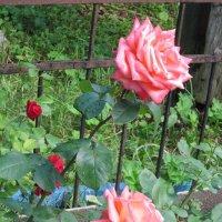 Две нежных розы :: Дмитрий Никитин