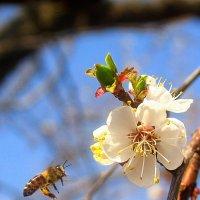 О весне... :: Владимир Стаценко