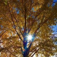 Осеннее солнце так ласково светит ... :: Galina Dzubina