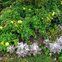 Цветы :: Canon PowerShot SX510 HS