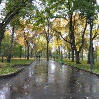 После дождя :: Наталья Тимошенко