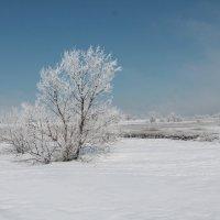 Снилось мне, неожиданно выпал снег... :: Ксения