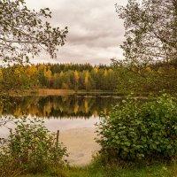 Середина осени :: Андрей Дворников