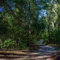 В лесу. :: Владимир M