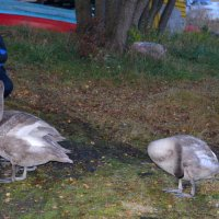 Внимание, птички, снимаю! :: Caren Yvonne Rikkilä
