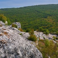 Краски крымского горного леса :: Андрей Козлов