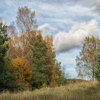 Роминтская пуща. Осень. :: Sergey Polovnikov