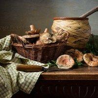 Рыжики-грибы :: Татьяна Карачкова