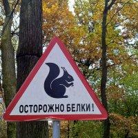 Страшнее белки зверя нет! :: Марина Домосилецкая