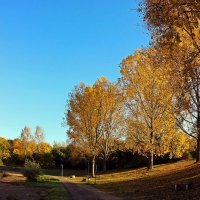 Золотые кудри тополей :: Alexander Andronik