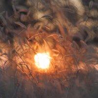 В солнечном свете :: Алина Шостик